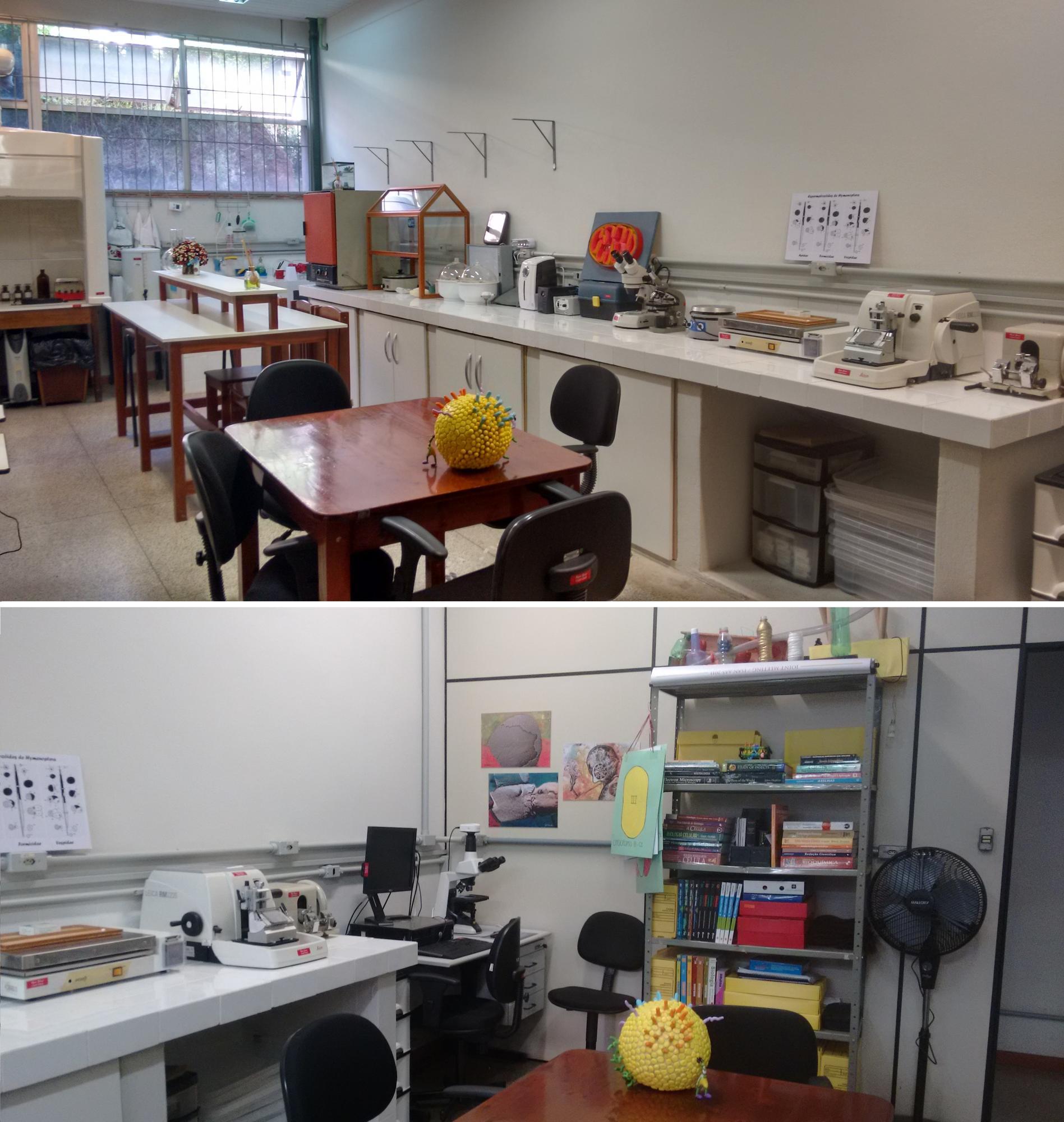 Laboratório De Morfologia